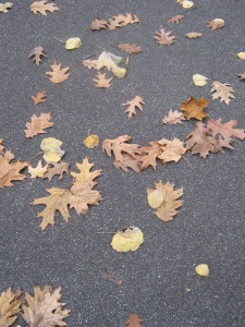 All the beautifull fall leaves are on the path.