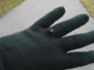 Cheap 99 cent gloves...but they kept my hands warm.