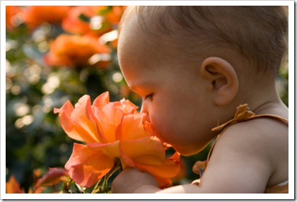 Baby girl smelling giant rose